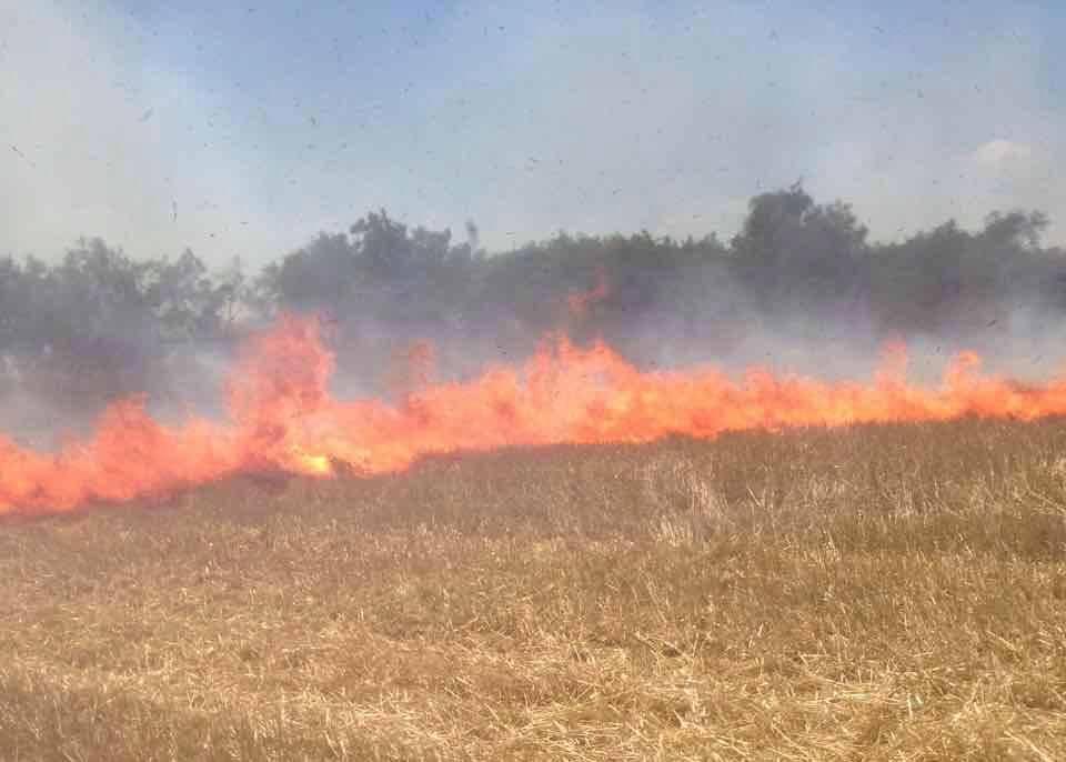 19989453_1364170996972235_8730346455481134199_n В Килийском районе фермеры сжигают стерню вместе с лесопосадками и животными