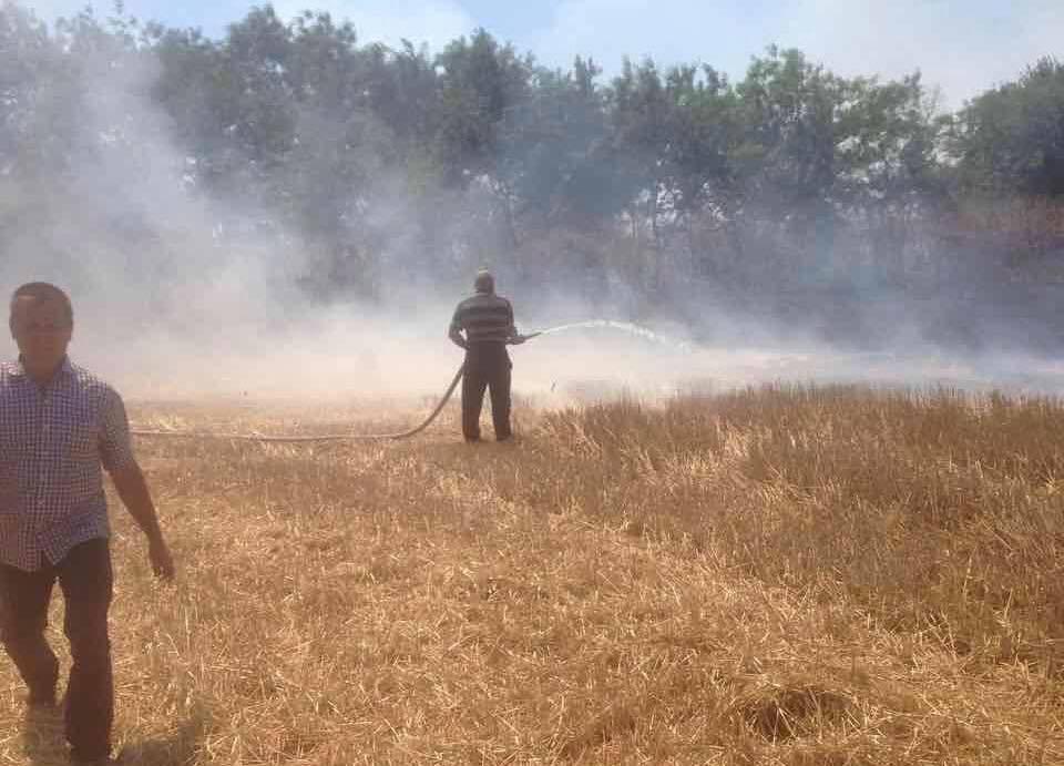 19990260_1364171006972234_7214211552198987433_n В Килийском районе фермеры сжигают стерню вместе с лесопосадками и животными