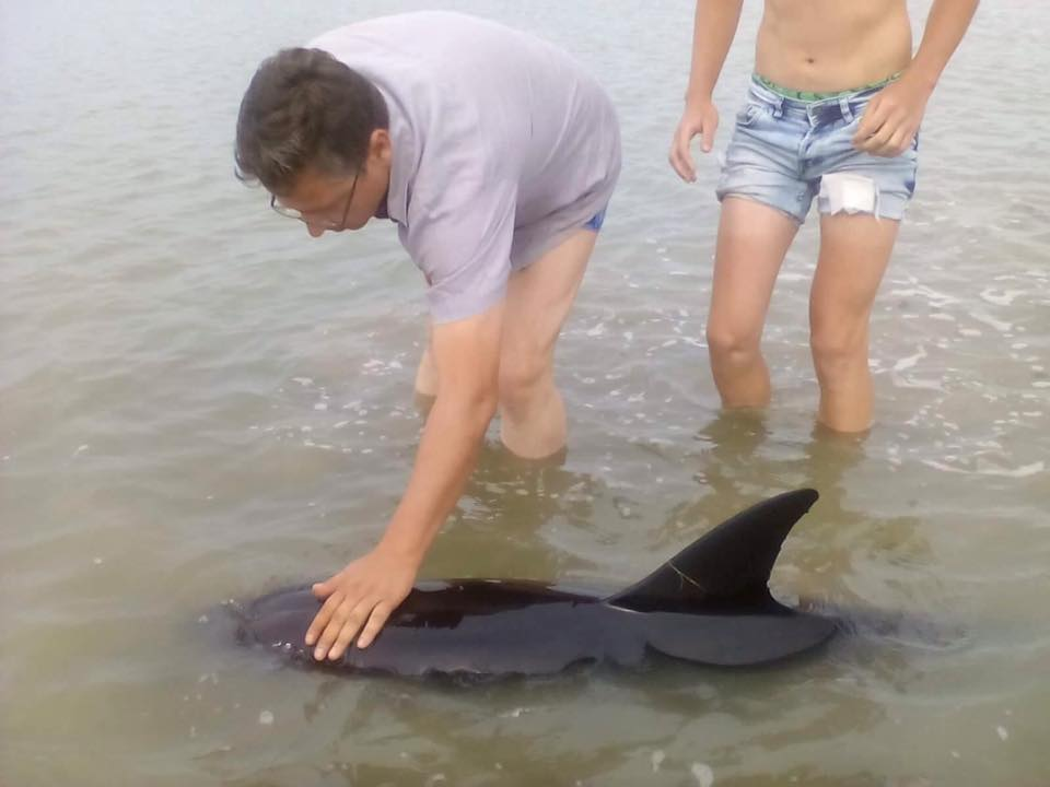 20046804_1631985066853901_202224764842836283_n В районе Вилково туристы спасли трех дельфинов