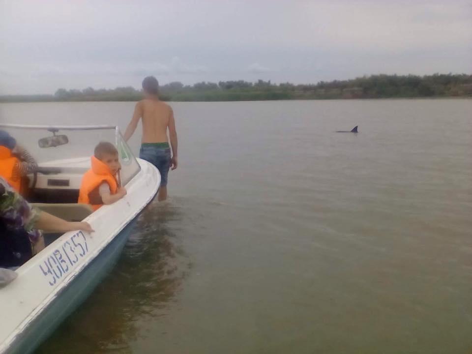 20106321_1631984930187248_4072918056001360305_n В районе Вилково туристы спасли трех дельфинов