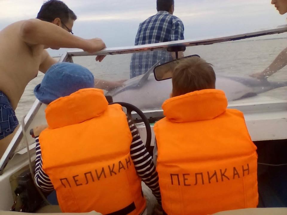 20108671_1631985193520555_2557685380363576861_n В районе Вилково туристы спасли трех дельфинов
