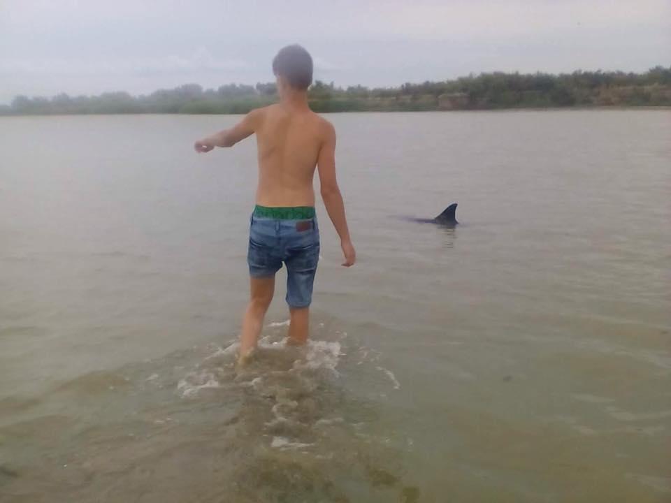 20139797_1631985063520568_8979456360438192983_n В районе Вилково туристы спасли трех дельфинов
