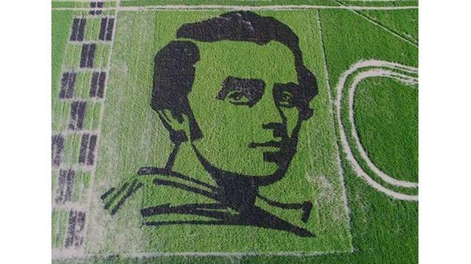 96963502_20046432_841877569311070_8582212636232995508_n Украинские селекционеры из рисовых посевов создали гигантский портрет Кобзаря