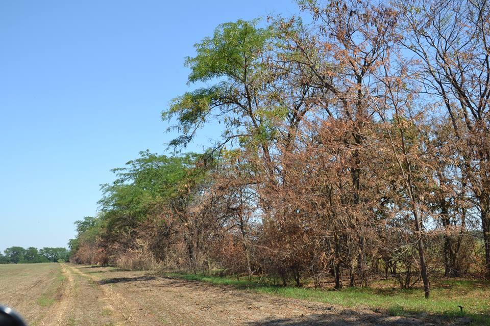 20613990_1442839679168847_878936489_n После нас хоть потоп: владельцы полей продолжают массово выжигать стерню - гибнут растения и животные