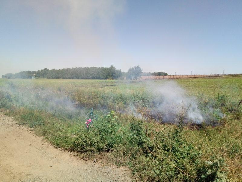 P70801-141419-e1501674010939 После нас хоть потоп: владельцы полей продолжают массово выжигать стерню - гибнут растения и животные