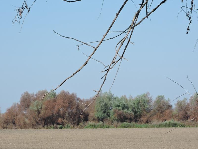 Погрозить пальцем — не средство борьбы: на Измаильщине фермеры безнаказанно выжигают  поля и лесополосы