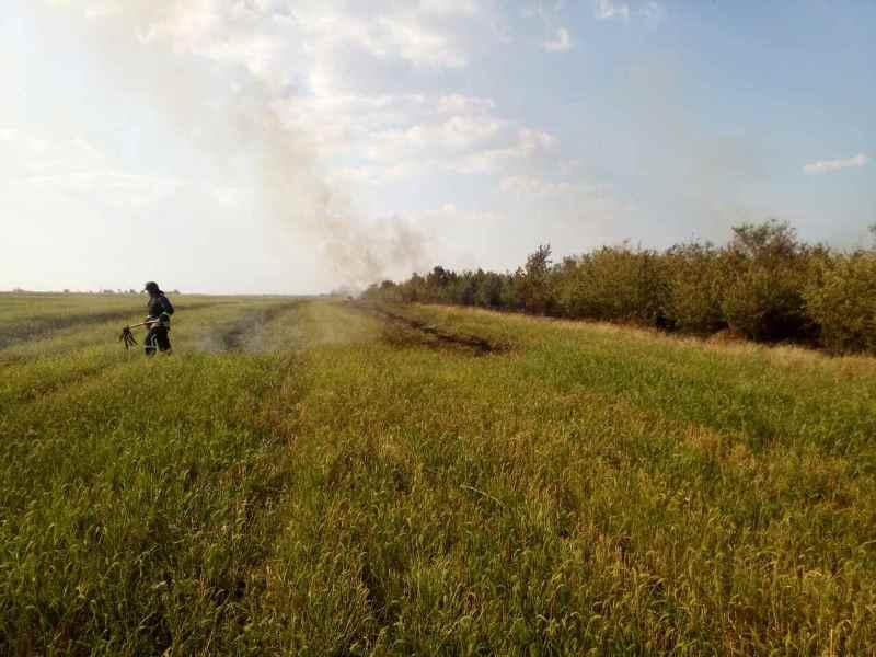 viber-image Жара атакует: в Одесской области горел сосновый лес - к тушению привлекали авиацию