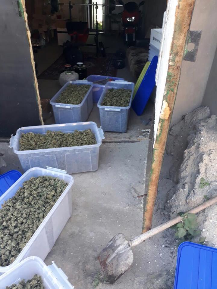 21270930_1658814550857288_3566950446983802177_n В Саратском районе наркодилер местного разлива собрал около 40 кг элитной марихуаны