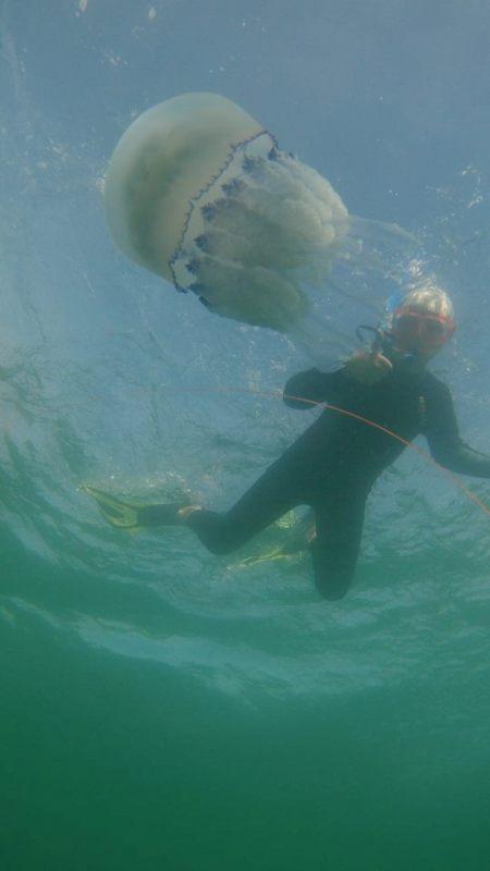 21462690_1582759348451936_2289078727174732155_n На одесском побережье Черного моря запечатлели гигантских медуз