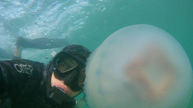 21463129_1582759675118570_7826250553400175105_n На одесском побережье Черного моря запечатлели гигантских медуз