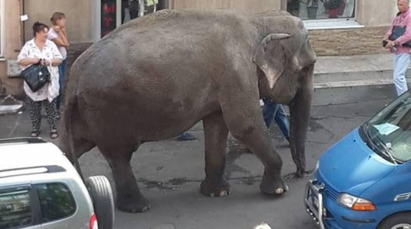 Фотофакт: по центру Одессы сегодня разгуливал слон