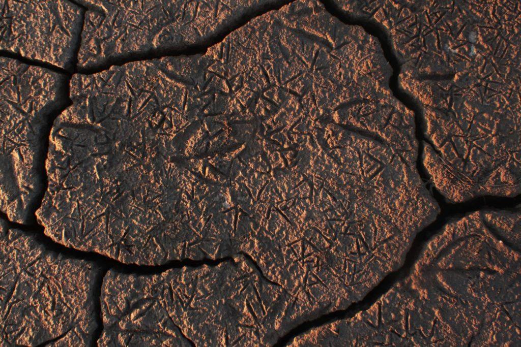 Эколог: саботаж областных чиновников превращает заповедную зону нацпарка «Тузловские лиманы» в пустыню