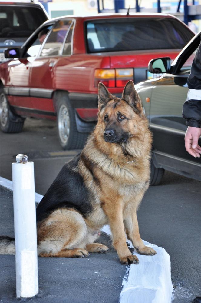 DSC_0092 Белгород-Днестровские пограничники показали своих потрясающих пушистых помощников