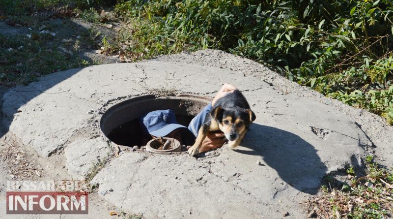 В Килии собака упала в колодец: спасатели помогли ей выбраться