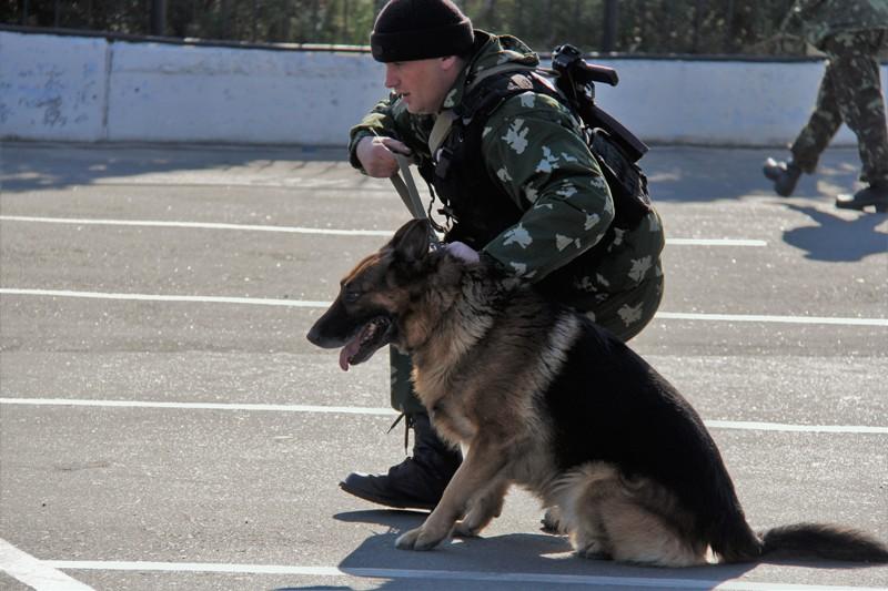 IMG_7905 Белгород-Днестровские пограничники показали своих потрясающих пушистых помощников