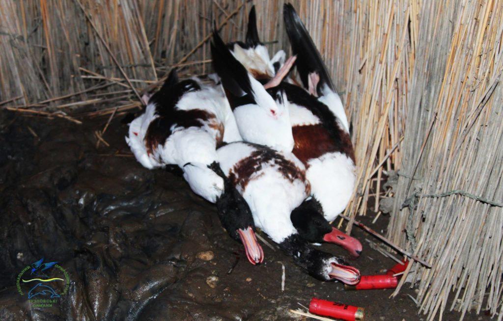 22104397_770492516470176_4243505777381859945_o-1024x654 НПП «Тузловские лиманы»: идиллию краснокнижных птиц, готовящихся к перелету, нарушили выстрелы браконьеров