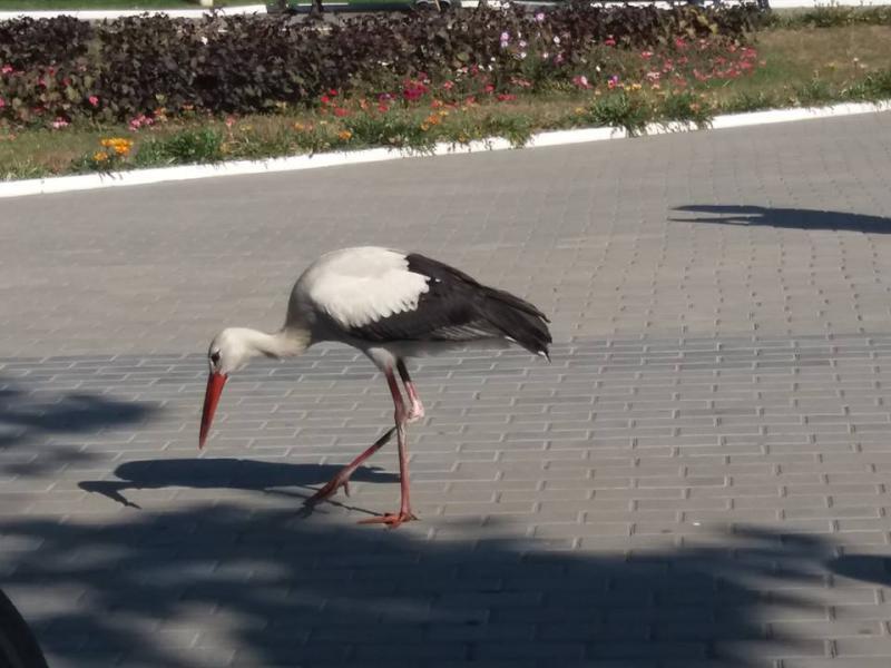 «И не аист, и не человек», - директор Измаильской станции юннатов рассказала об участи «очеловеченных» птиц