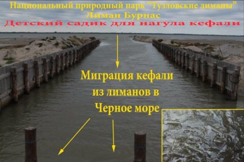 """Рыбоохранный патруль дал добро на неограниченный вылов кефали в заповедной зоне НПП """"Тузловские лиманы"""