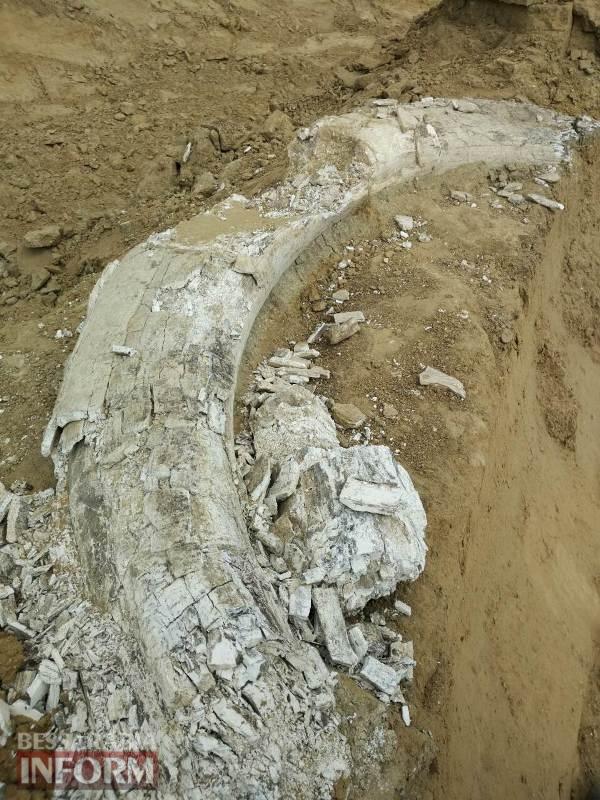 Привет из ледникового периода: в Ренийском районе обнаружили бивень мамонта