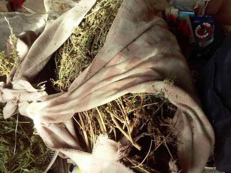 IMG-975c6241cce6eddd2119c953a3a90b0e-V В Измаильском районе разоблачили наркоплантатора с немалым урожаем конопли