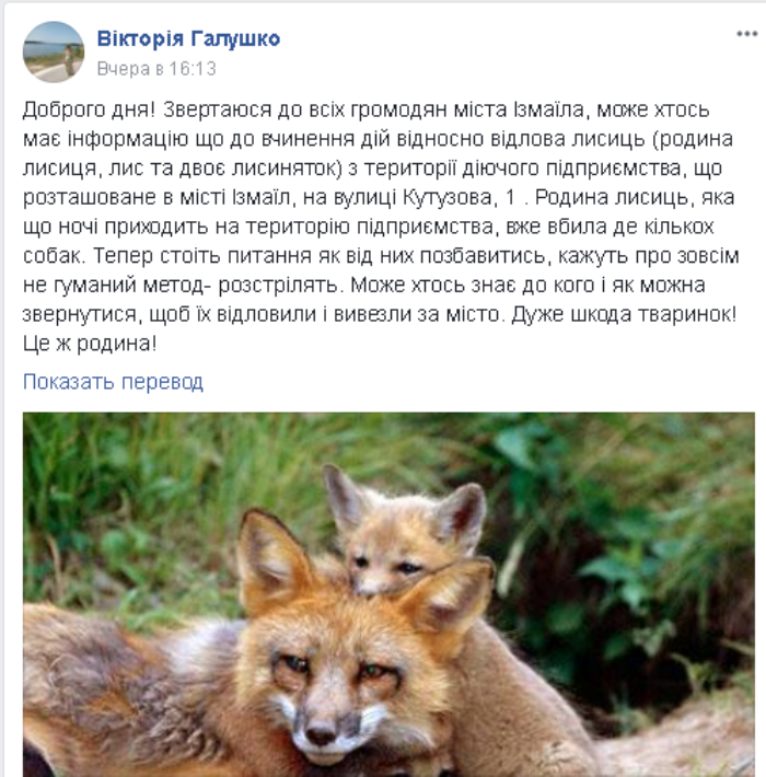 """В Измаиле в районе тургостиницы """"Дунай"""" завелись дикие лисы"""
