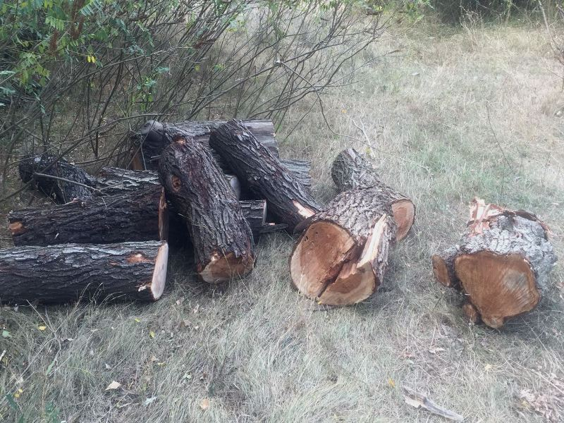 news_20171007_122313_1507368193 Вблизи города Рени поймали браконьеров-лесорубов с партией свежесрезанной древесины