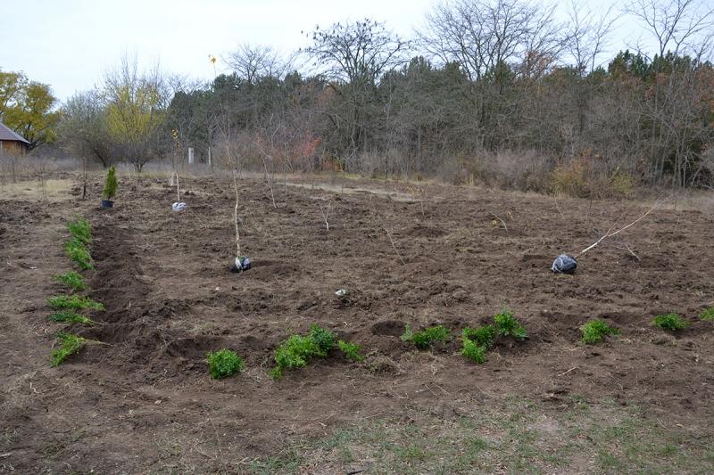 1-5 В Измаиле сотрудники лесничества и учащиеся Лесной школы в заповедной зоне заложили новый парк
