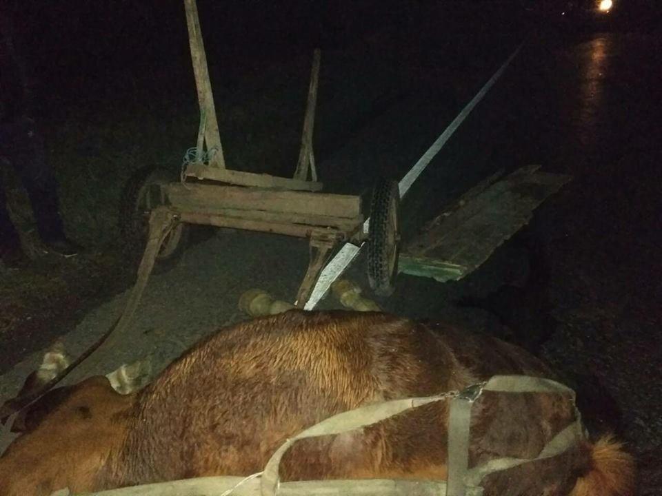 """23473002_512279175796160_2495369662756988052_n В Болградском районе микроавтобус """"влетел"""" в гужевую повозку, три человека и лошадь погибли"""