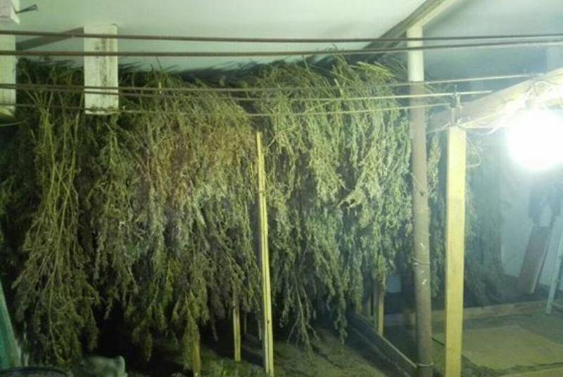23794908_517492305274847_4451798749439896904_n Белгород-Днестровский р-н: у жителя села полицейские обнаружили 70 кг марихуаны