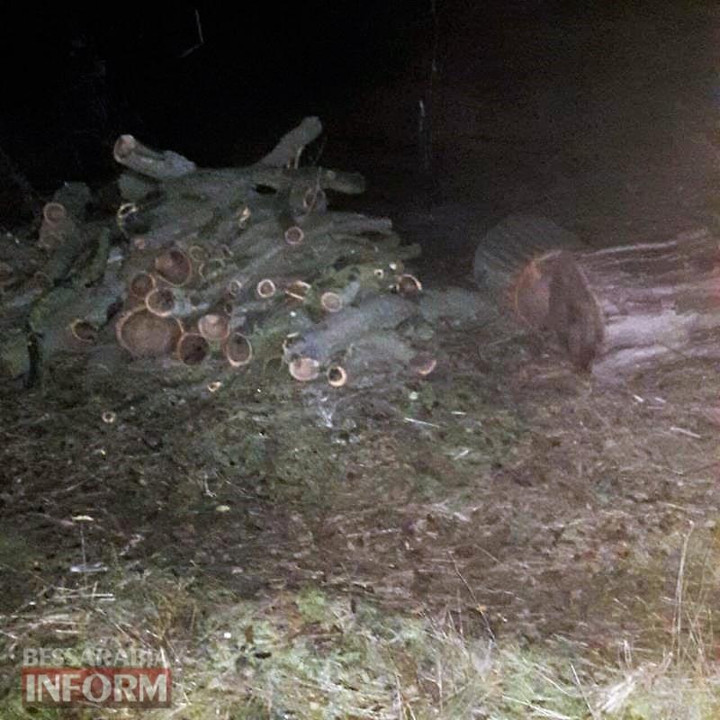 Неравнодушные жители Килийщины помогли остановить ночную вырубку ценных деревьев
