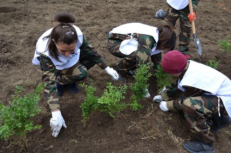 9 В Измаиле сотрудники лесничества и учащиеся Лесной школы в заповедной зоне заложили новый парк