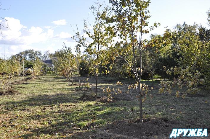 image3_3808 В Болграде на месте запущенного парка появилась дубовая роща