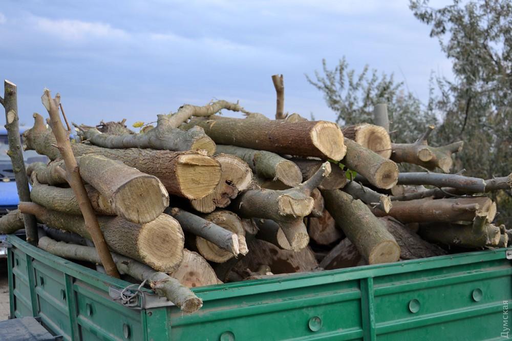 picturepicture_150755186267493964201184_49400 Чем дальше в лес, тем меньше дров: Измаильский лесхоз борется за спасение тающих лесных массивов