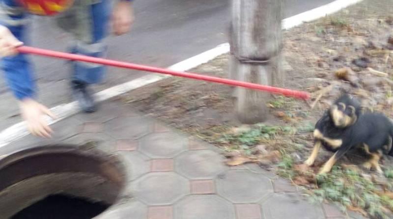 В Измаиле спасатели помогли собаке выбраться из 4-метрового колодца