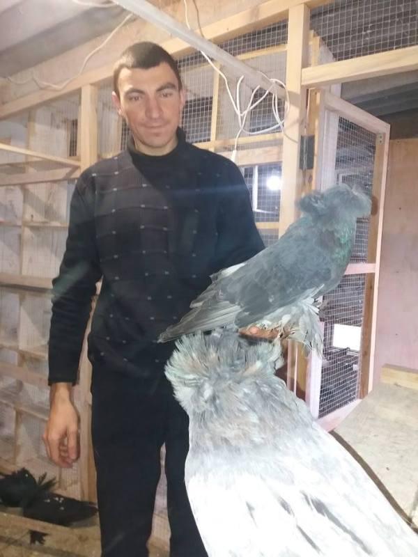 24993316_526266251064119_1295563420331546071_n Закон и голуби: полицейский из Татарбунар увлекается разведением декоративных голубей