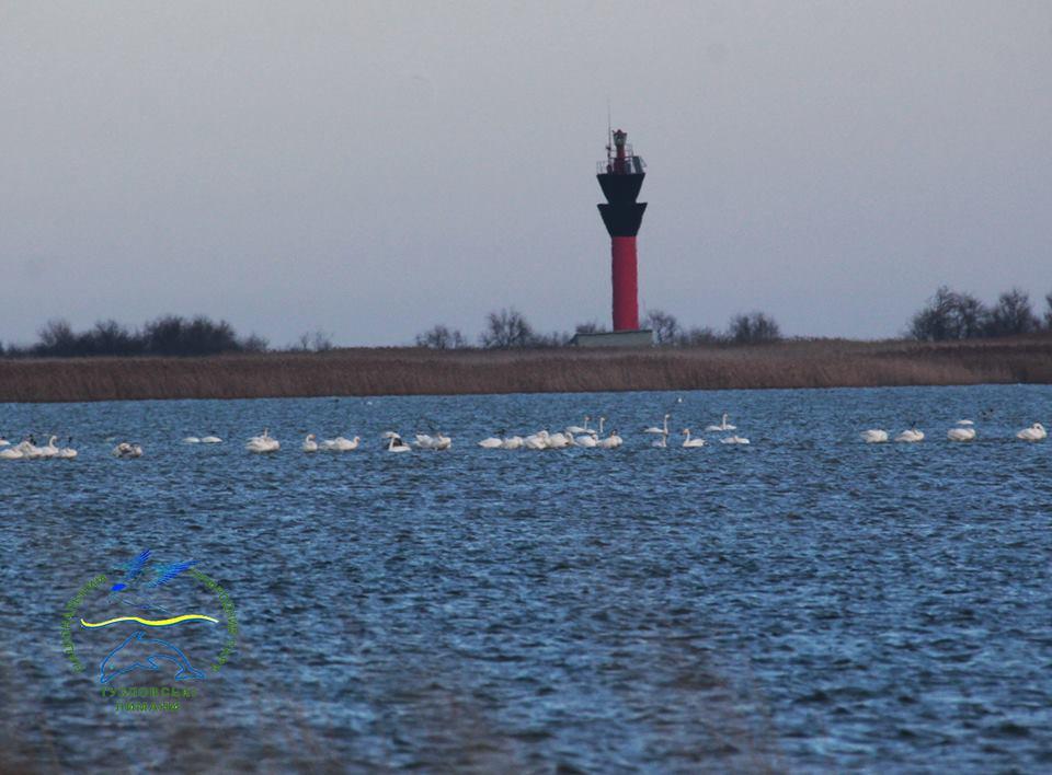 Орнитологи НПП «Тузловские лиманы» пересчитали всех зимующих в нацпарке птиц