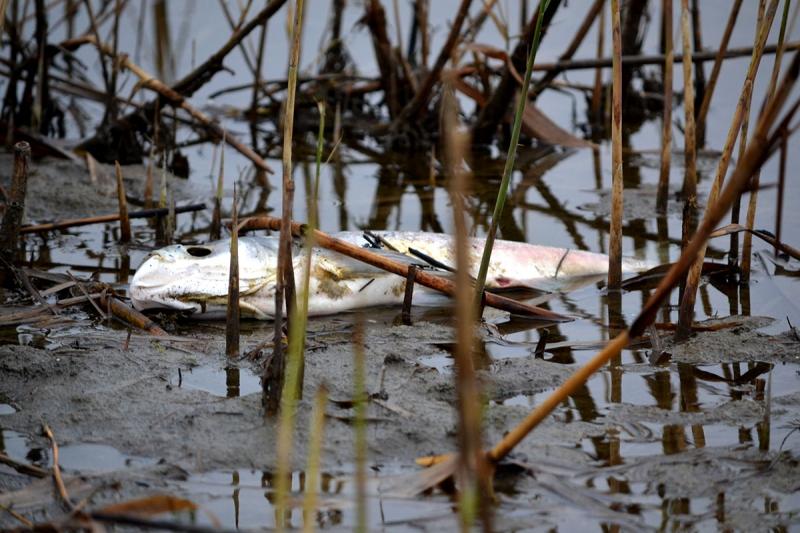 Не попадись на удочку: зараженную рыбу с озера Сафьяны измаильчане могут определить по ряду признаков