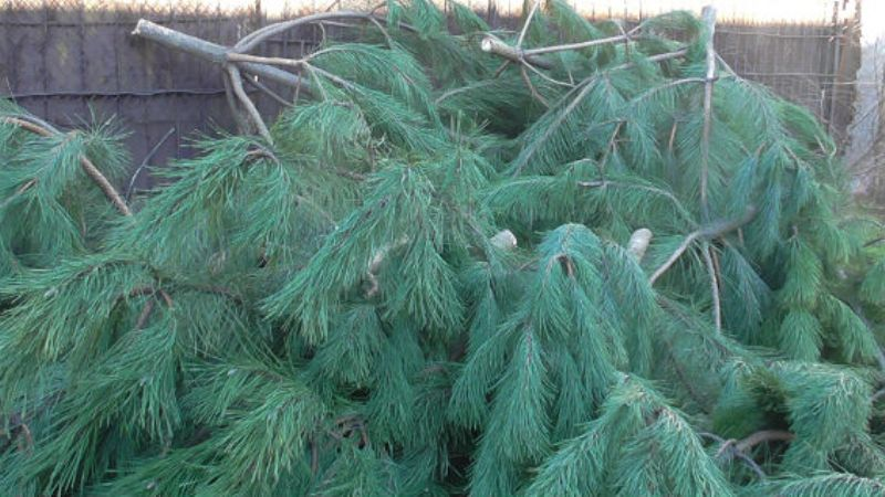 Рейд по ёлочным базарам в Аккермане: полицейские конфискуют нелегальные хвойные деревья