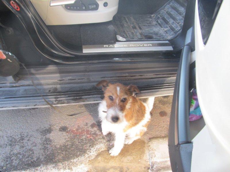 Служебный пес белгород-днестровских пограничников учуял в «Range Rover»-е с российской регистрацией патроны