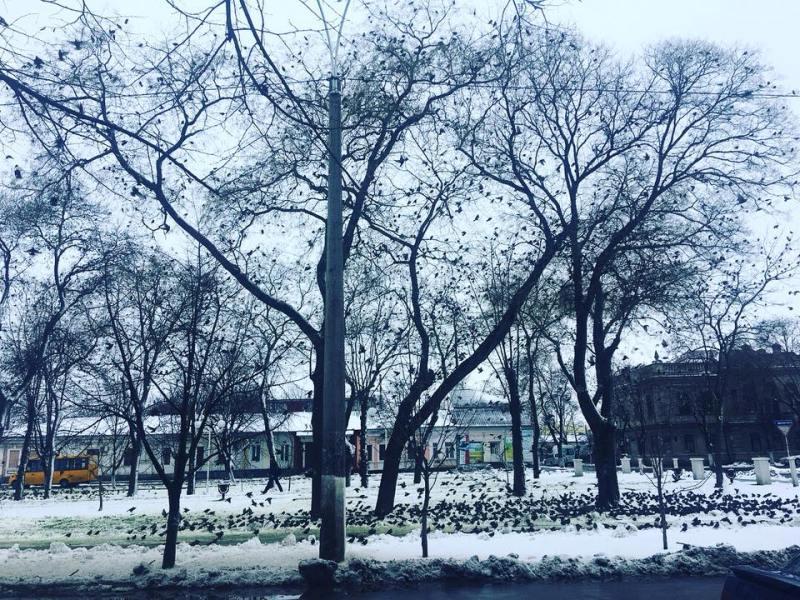 Воздушная атака: из-за морозов в Измаиле аномальное нашествие скворцов