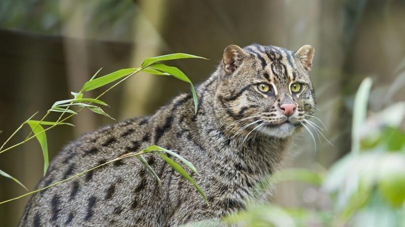 Обнародован список животных, исчезнувших навсегда в 2017 году