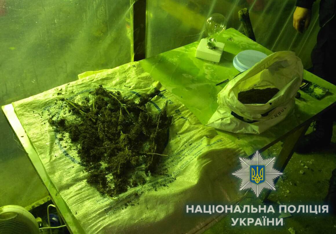 Житель Болграда обустроил теплицу для конопли в арендованном подвале (фото)