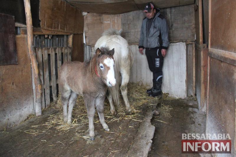 На Измаильской станции юных натуралистов пополнение — у пони Ники и Лютика родился жеребенок