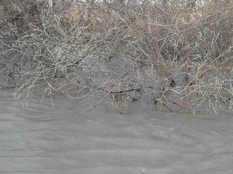 На Дунае возле Килии обнаружили еще одну плавучую мину