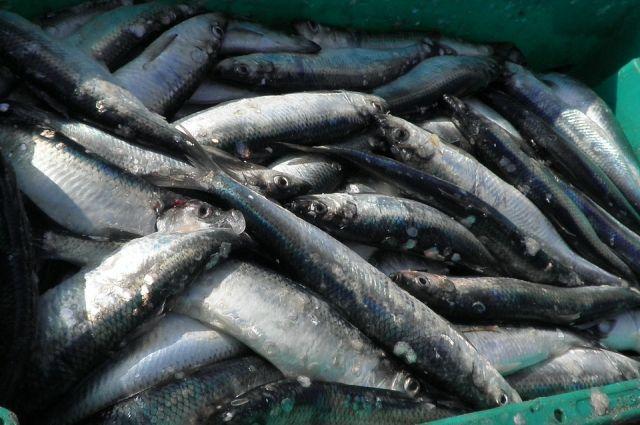 Вилковские пограничники на Дунае задержали рыбаков-браконьеров