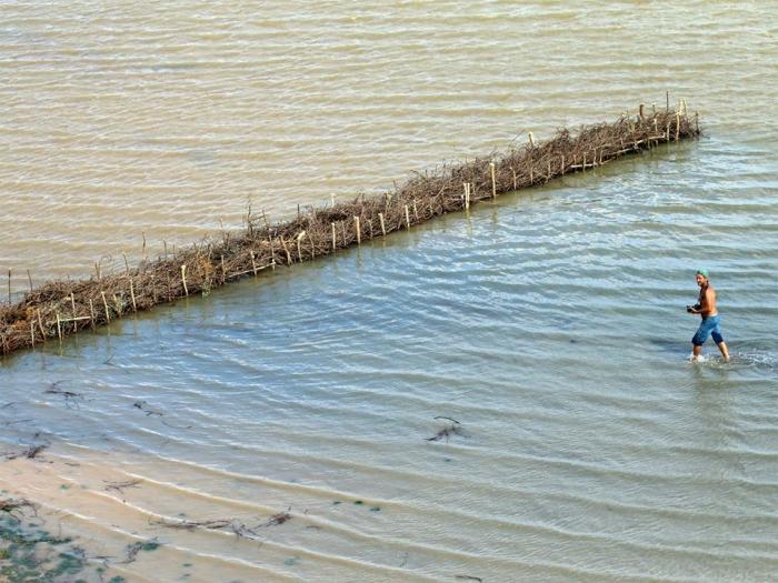 «Вербный пикник»: экологи предлагают необычную технологию строительства дороги через Днестровский лиман