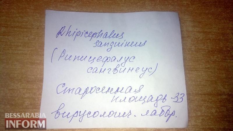Клещи атакуют: после укуса жители Измаила вынуждены самостоятельно доставлять кровососа на экспертизу в Одессу