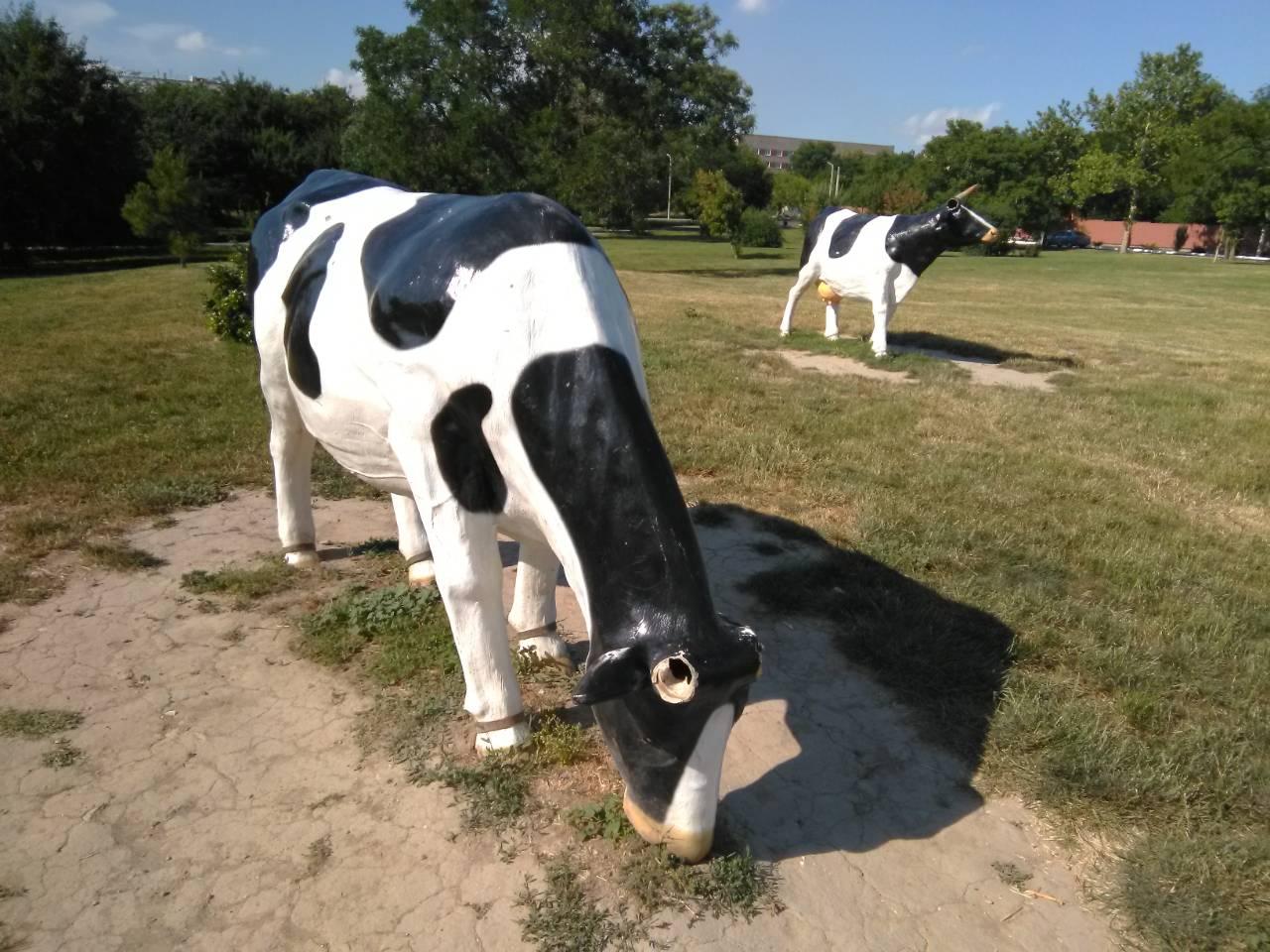 Фотофакт: в Измаиле статуям коров на набережной Дуная обломали рога и уши