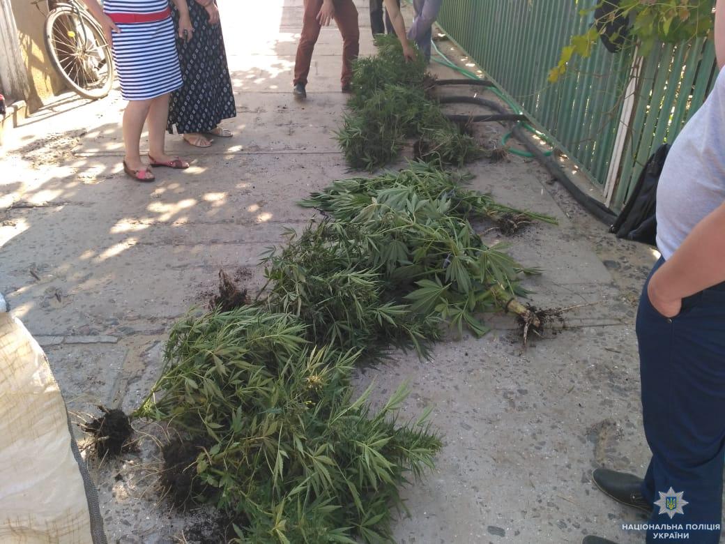 В Боградском районе полиция разоблачила наркоагрария