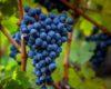 Вино как национальный бренд: Одесская ОГА инициировала сбор предложений от виноделов, чтобы направить их в Кабмин и Верховную Раду